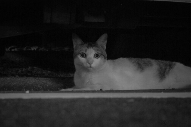 Today's Cat@2013-08-17