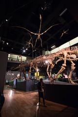 Melbourne Museum Prehistoric Animals (G Bayliss) Tags: museum fossil dinosaur australia melbourne prehistoric