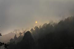 Golden Mist (Aadilsphotography) Tags: trees pakistan sun mist mountains nature fog canon photography studios aadils fadils