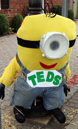 17 TEDS Minion