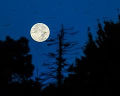 Full Moon Flightpath