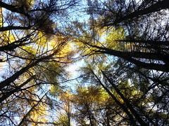 Sky shot (Flickr Widow) Tags: scotland perthshire dunkeld birnam thehermitage