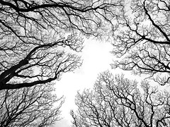 Bare Branches (manxmaid2000) Tags: above winter sky blackandwhite bw cold tree monochrome up weather season mono branch bare branches below reach stark vision:outdoor=0911 vision:sky=0577