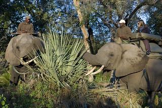 Botswana Okavango Delta Photo Safari 45