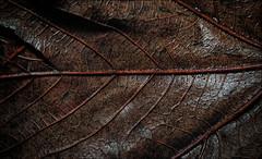 IMGP0620(CFX)(DXO)1 (Mat W) Tags: morning rot leaves rain garden december floor ground we 2013 colorefexpro dxofilmpack