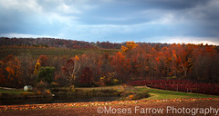 Lyman Orchards (Moses Farrow) Tags: autumn trees fall canon landscape seasons fallcolors connecticut pumpkins newengland ct moses apples tamron lyman orchards middlefield farrow tamron18270