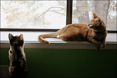 Lacey's cats visit (K. Sawyer Photography) Tags: cats window animals