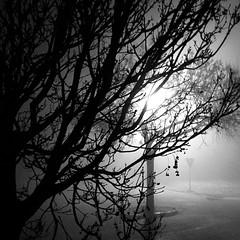 Morning fog (Lorenzo T. (ricominciamo...)) Tags: cameraphone winter blackandwhite bw fog square bn squareformat nebbia inverno bianconero iphoneography instagramapp uploaded:by=instagram