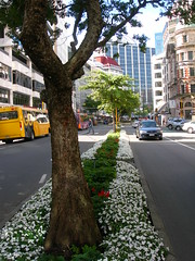 Lambton Quay at 5pm on Friday evening (Jacqi B) Tags: road street newzealand bus tree nz wellington aotearoa lambtonquay flowerbeds project365 project3652014