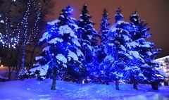 Blue Christmas spruce and birch tree light display, downtown in the snow, Anchorage, Alaska, USA (Wonderlane) Tags: christmas blue light usa tree alaska display anchorage birch spruce wonderlane 7157 downtowninthesnow bluechristmastreelightdisplay