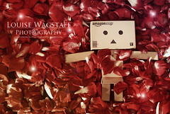 My Funny Valentine (loulovesdanbo) Tags: cute love toy lights photo petals emotion sweet valentine sparkle emotive danbo danbophotography