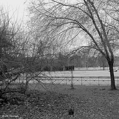 009244 - Alcal de Henares (M.Peinado) Tags: parque blackandwhite bw copyright espaa byn blancoynegro spain rboles sony paseo 2014 comunidaddemadrid alcaldehenares cuadrado formatocuadrado sonydsch200 08022014 febrerode2014