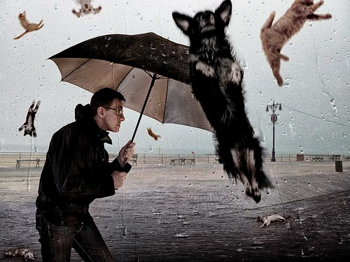 Raining Cats and Dogs by David Blackwell., on Flickr