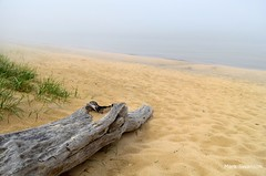 Foggy Beach - Explore (mswan777) Tags: lake seascape color beach nature water fog landscape outdoors sand nikon michigan great lakes foggy driftwood polarizer theperfectphotographer d5100