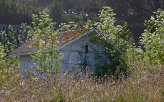 1  Pump House (Room With A View) Tags: field weeds bokeh www grasses