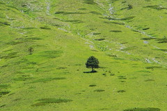 Italy,Umbria,Norcia - tree2 -by Gianni Del Bufalo CC BY 4.0