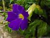 Flor (Marcos A Malagoli) Tags: flowers flores macro nature natureza flor fujifilm lilas