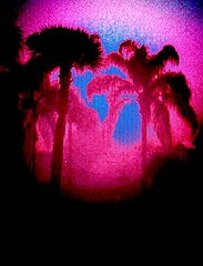Playing with color, contrast, vibrance, etc!!! (calicatt2000) Tags: pink contrast painting colorful play scene palmtrees popart andywarhol vibrance