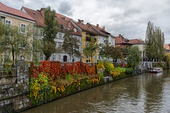 Ljubljanica rivers banks at fall (marko.erman) Tags: ljubljana ljubljanica river slovenia slovenija banks fall autumn sony colors city cityscape architecture houses historical travel outside