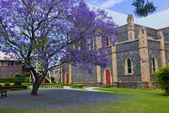 garden city @ aussie (nzfisher) Tags: tree blossom flower flowers blossoms season summer spring seasonality 35mm summilux leica purple church toowoomba queensland australia jacaranda