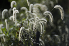 Overgrown Fence (WilliamND4) Tags: hff fencefriday nikon d810 nikond810 meyeroptikgoerlitztrioplanf28100lens fence green overgrown