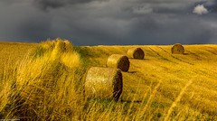 Make hay while the sun shines. (AlbOst) Tags: hay straw wheat bales farmland sunny cloudy heavyskies contrasts