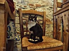 A coffee please!!!..Agiasos Lesbos Greece (panoskaralis) Tags: cats pets coffe chair cat lesbos lesvosisland lesvos island mytilene agiasos greece greek hellas hellenic aegean aegeansea indoor sony sonydschx60