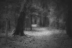 *** (pszcz9) Tags: polska poland przyroda nature natura parknarodowy nationalpark cieka path las forest pejza landscape wiosna spring beautifulearth sony a77 bw blackandwhite monochrome czarnobiae