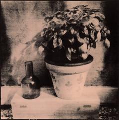 Bottle and basil vase (Antonio's darkroom) Tags: agfa isola pinhole gilford delta 3200 ilfotec argenta boom 117 se5 lith moersch stilllife