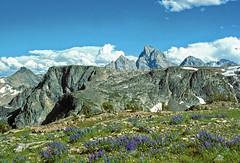 The Teton Range from its west slope (backside) (spotwolf5) Tags: wildflowers tetonrange