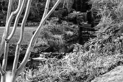 IMG_0470 (Antonio Corvigno) Tags: nature blackandwhite bw blackwhite waterfall longexp longexposure