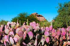 Colors of the Desert (kla4067) Tags: cactus desert phoenixaz