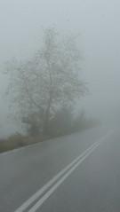 Μετεωρα P1260886 (omirou56) Tags: 169ratio panasoniclumixdmctz40 ελλαδα ελλασ ομιχλη δεντρα δεντρο δρομοσ greece hellas tree trees road street outdoor fog