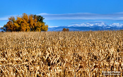Oct 20 2016 - Beautiful fall views in the Big Horn Basin (lazy_photog) Tags: lazy photog elliott photography worland wyoming nowater creek big horn basin fall 102016nowaterslabrootcellars