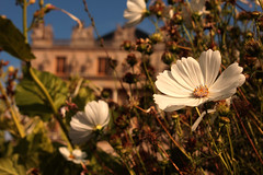 Versalles (Almu_Martinez_Jiménez) Tags: parís paris francia france belleza luz lught notredame torreeiffel opera