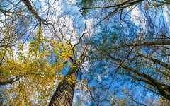 autumn colors (08) (Vlado Fereni) Tags: autumncolors autumn sigma1528fisheye fisheye zaprei novidvori hrvatska croatia nikond600 trees