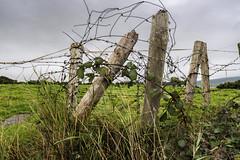 Haphazard (Flapweb) Tags: countykerry ireland fence fenced friday