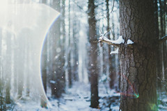 Now featuring: First Snow by .monodrift Got some snow on my... (flavoredtape) Tags: winter snow film wet forest lens 50mm nikon bokeh flare faux lightroom d600 f14g