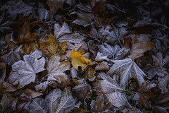 sealed. (P. Zimmer) Tags: winter color colour farbe leaf blatt autumn frhling fujixpro2 bltter leaves nature fall