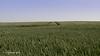 La trace (Steph-Photographie) Tags: charentemaritime charente poitoucharentes nouvelleaquitaine champs trace ciel nikon nikond610 nikonpassion nikond610tamron2470f28 tamronsp2470mmf28divcusd tamron bleu vert d610 d610fx fx green sky landscape lightroompanorama