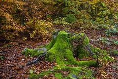 Eslovenia-2016-295 (Jos Manuel Garcs) Tags: knejanjiva cerknica eslovenia si