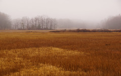 (jtr27) Tags: dsc02656e jtr27 sony alpha nex7 nex emount mirrorless ilc csc sigma 1770mm f2845 dcmacro laea2 adapter scarborough marsh fog maine newengland
