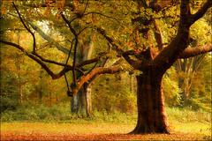 Two mighty trees (Hetty S.) Tags: trees mighty arms nature autumn alkmaar dehout canon eos hs hetty hettys