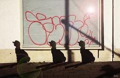 Paranoia I (peterpe1) Tags: paranoia flickr peterpe1 berlin shadows schatten