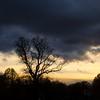** (donvucl) Tags: london clissoldpark trees colour squareformat silhouettes sky nikond7000 donvucl