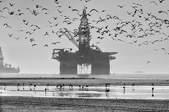 Oil Rig and Birds (C McCann) Tags: walvisbay namibia oil rig birds black white