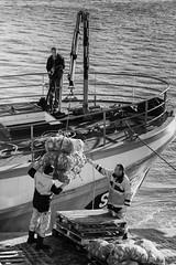 Déchargement/Unloading (guillaumegesret) Tags: grandemarée pêche pêcheurs poisson débarquement bretagne saintmalo port marin