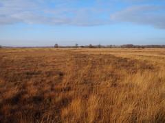 the marsh and the watchtower (michaelmueller410) Tags: torfmoor moor swamp marsh nettelstedt hille sumpf gras bume turm himmel wolken braun winter herbst autumn fall frost