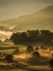 Fog. Why So Beautiful? (mattosberger) Tags: fog foggy morning tree trees forest green autumn fall sunday canon nature outdoor hills field sunrise goldenhour sunlight sunny switzerland swiss