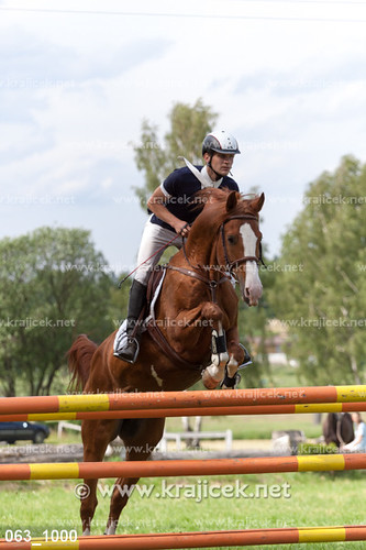 horse showjumping koně quäler skokovézávody jakubbárta humpoec
